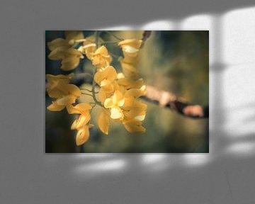 Goldenrain von Picsall Photography