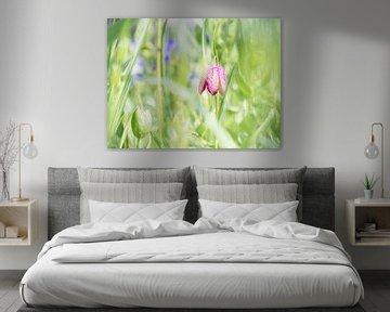 Storchenblume, Frühlingsblume von Picsall Photography