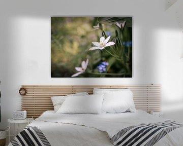 Vogelmilch von Picsall Photography