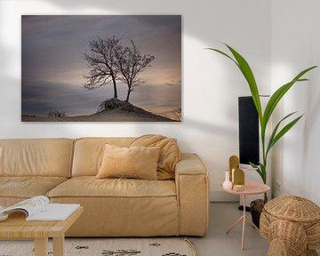 bomen in ochtend licht van Rene van Rijswijk