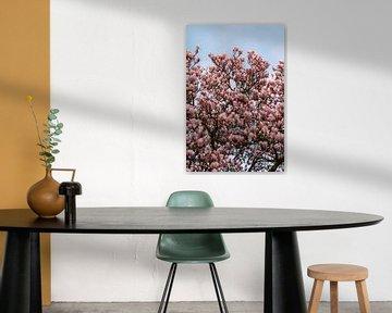 Magnolienbaum in Blüte   botanische Naturfotografie Druck von Manon Galama
