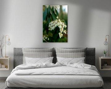 Botanische Pflanzen und Blumen Kunst | Fine Art Floral Fotografie von Karijn | Fine art Natuur en Reis Fotografie