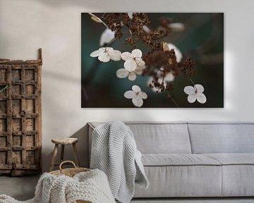 Blüte im Winter von Emi Barendse