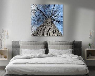 Baumtraum von Kirsten Warner