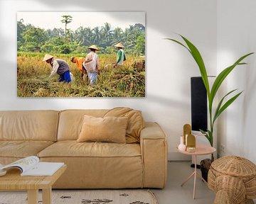 Agriculteurs lors de la récolte du riz sur Eduard Lamping