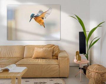 Vögel - Eisvogel betend in dieser Winterperiode von Servan Ott