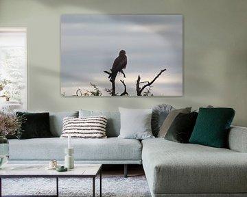 Roofvogel op tak in Zuid-Afrika van Capture the Moment 010