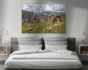 Vache dans les montagnes italiennes sur Lynn Haverhals