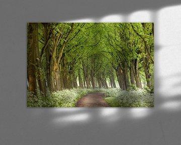 Der Flötenweg von Lars van de Goor
