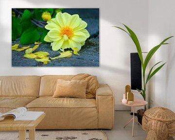 Gelbe Blume auf dem Boden von Olena Tselykh