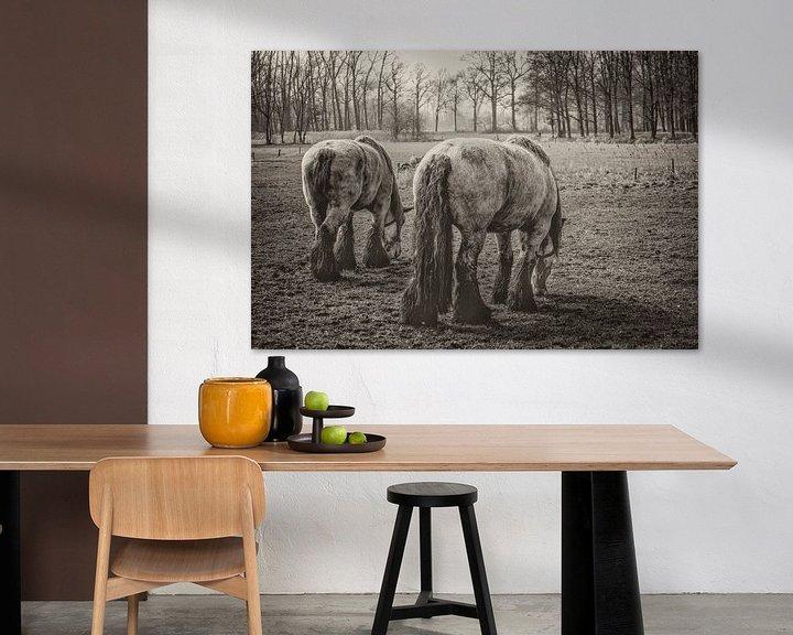Sfeerimpressie: 900 kilogram bruinschimmel (hollands trekpaard) bij middelrode van jan van de ven