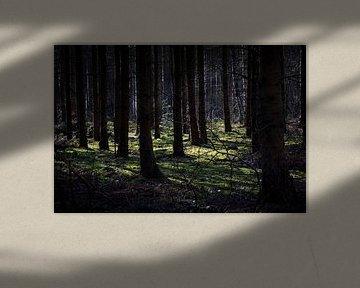 magic light van Nienke Stegeman