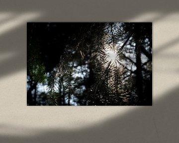 catching sunlight van Nienke Stegeman