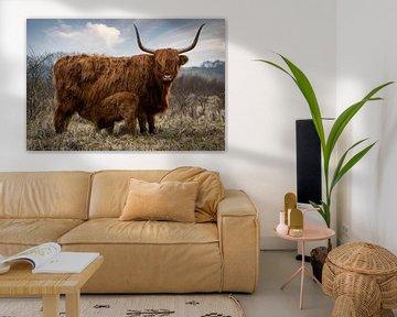 Schotse Hooglander koe met kalf in natuurgebied van Marjolein van Middelkoop