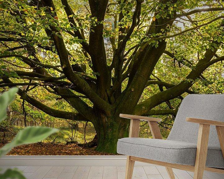 Sfeerimpressie behang: Een oude Beukenboom aan het begin van de herfst van Erna Böhre