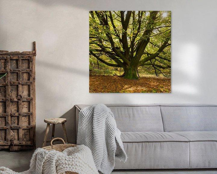 Sfeerimpressie: Een oude Beukenboom aan het begin van de herfst van Erna Böhre