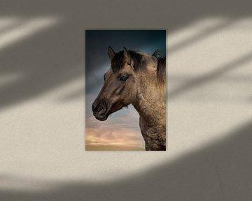 Pferd: Portrait Konik Pferd von Marjolein van Middelkoop