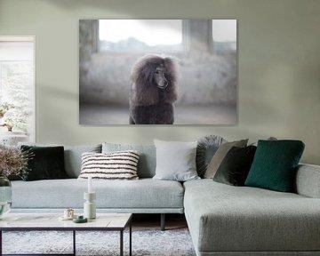 Grauer Pudel von Janine Bekker Photography