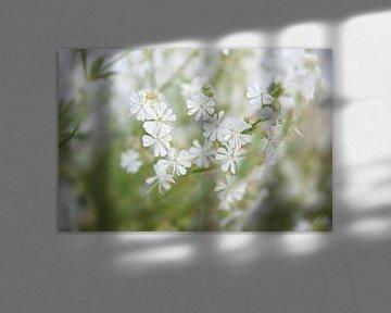 Sanfte weiße Blüten von Silvio Schoisswohl