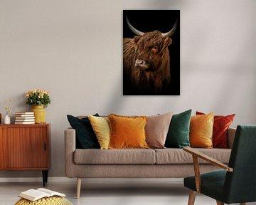 Schotse Hooglander: portret met zwarte achtergrond van Marjolein van Middelkoop