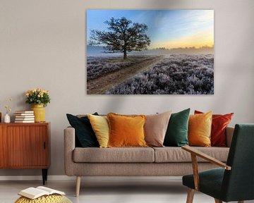 Frisse hei met rijp en opkomende zon van Remco Bosshard