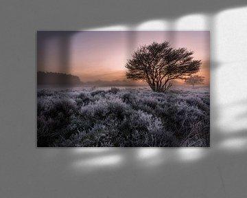 Frost on the Heath 3 von Remco Bosshard