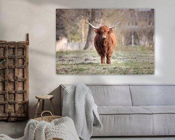 Schottischer Highlander von Janine Bekker Photography