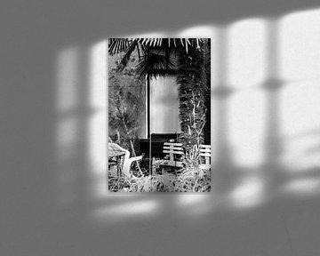 Palmboom in stadstuin in zwart wit van Lynn van Gijzel