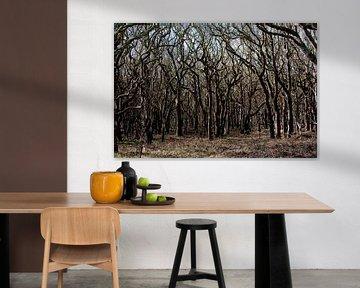 Forêts près de la plage en Zélande sur Louis en Astrid Drent Fotografie