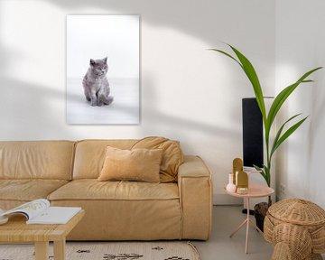 Kätzchen Butter von Janine Bekker Photography