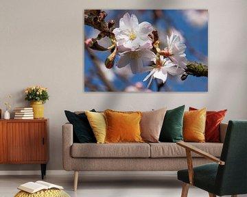 Winterkers (Prunus subhirtella) van Alexander Ludwig