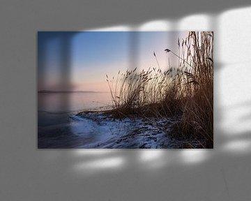 Schilf am Ufer des Salzhaff bei Rerik im Winter von Rico Ködder