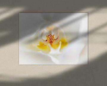 Orchidee von Rob Boon