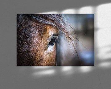 Belgisch paard van ton vogels