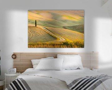 Toscaanse heuvels en cypressen van Damien Franscoise