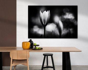 Stabile Tulpe von Henry Oude Egberink