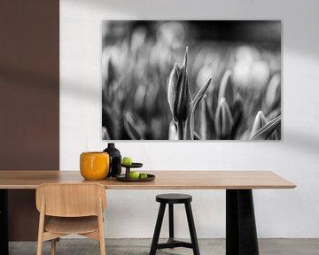 Tulpe mit Tau bedeckt von Henry Oude Egberink