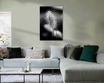 Pinsel Blume mit Tau bedeckt von Henry Oude Egberink