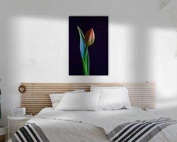Elegante Tulpe von Thomas Jäger