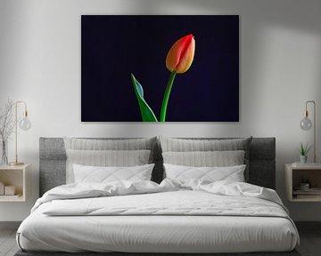 Malerische Tulpe von Thomas Jäger
