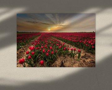 Rood Tulpenveld van Quirien Marijs