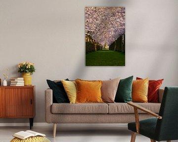 Kirschblüte von Nynke Altenburg