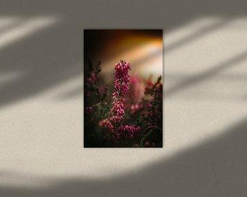 Blumen und Pflanzen im Frühling von Thilo Wagner