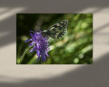 Schmetterling auf Blume von Fotos by Jan Wehnert