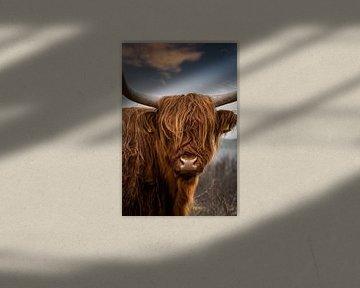 Schotse Hooglander portret van Marjolein van Middelkoop