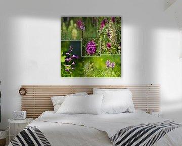Wilde Orchideen von Ines Porada