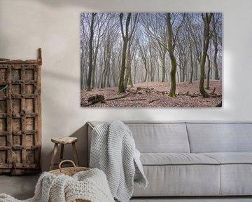 Hagelbui in het Speulderbos op de Veluwe