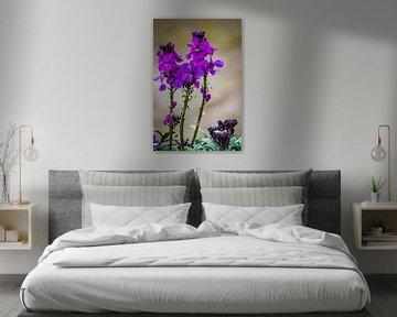Frühling, lila Blüten Sommer Violett von Marjolein van Middelkoop