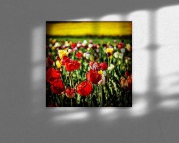 Tulpen landschap van Dusan Pintner