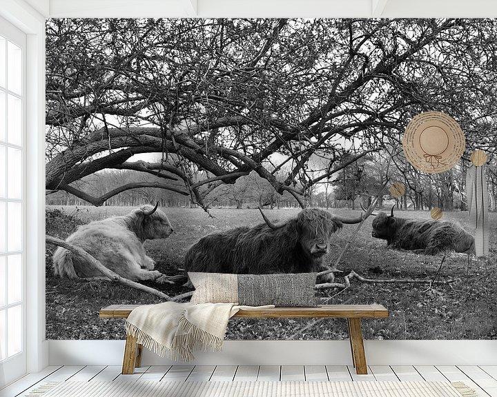 Sfeerimpressie behang: Schotse Hooglanders van Bernard van Zwol